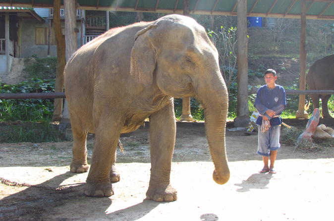 2-Day Thai Elephant Care Center Experience from Chiang Mai