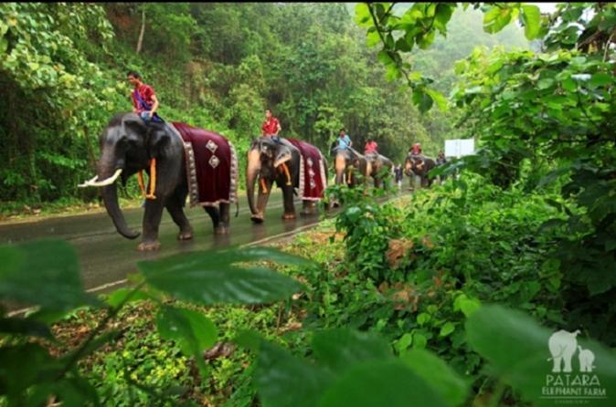 Half day patara elephant farm experience from chiang mai in chiang mai 315691