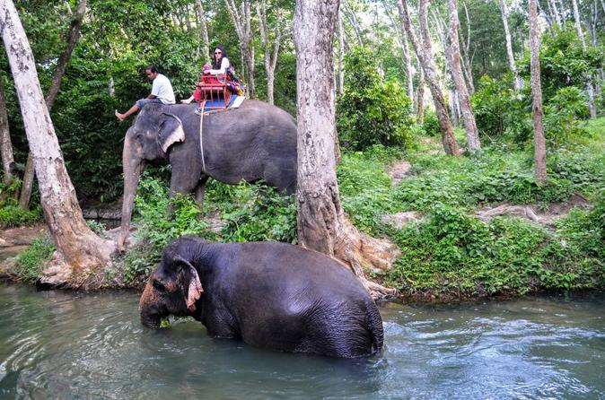 Elephant trekking in the jungle of krabi in krabi noi 222559