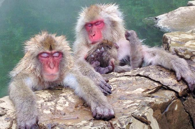 Snow monkey and zenko ji temple day tour in nagano in nagano 216048