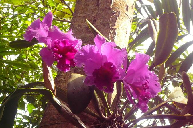Phantasea Tropical Botanical Garden Admission in St Thomas
