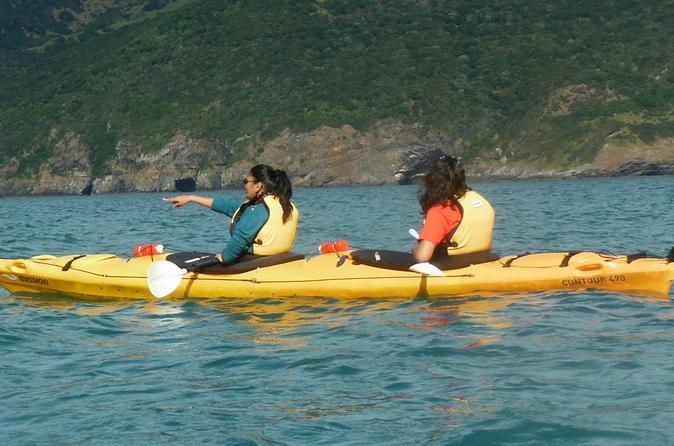 Shore Excursion: Scenic Cruiser Sea Kayaking Safaris in Akaroa New Zealand, Pacific Ocean and Australia
