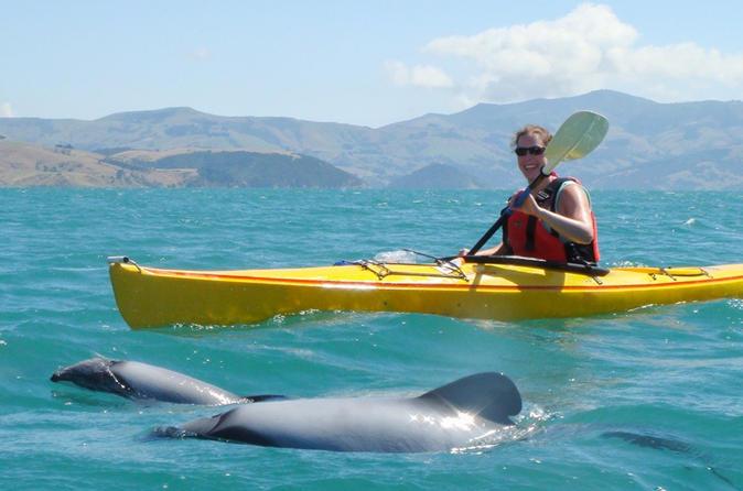 Sunrise Kayaking Safari with Sea Wildlife in Akaroa