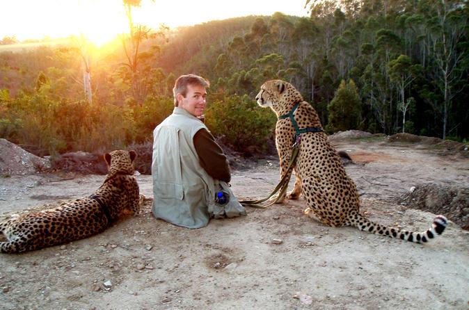 Cheetah Walk and Wild Cat Experience