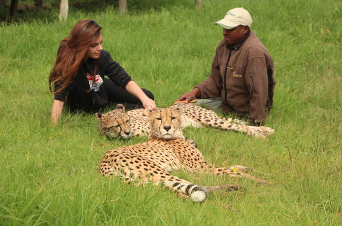 Wild Cat Animal Keeper for the Day and Tour