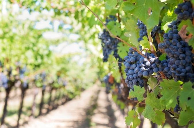 2 day marsala wine tour in marsala 228588