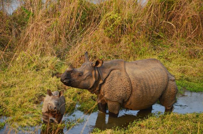 3 night wildlife adventure tour from kathmandu in bharatpur 212759