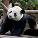 5-Day Small-Group China Tour: Chengdu and Shanghai