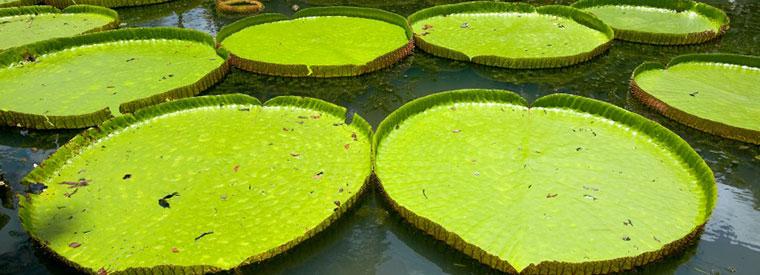 Iquitos Tours, Travel & Activities