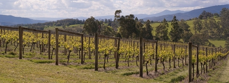 Yarra Valley, Australia Tours